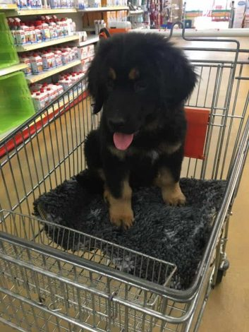 Schon als kleiner Franky liebe ich das Shoppen gehen.
